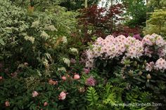 Hillier won their Gold Medal at the 2015 RHS Chelsea Flower Show, here's another small section of their beautiful exhibit at Chelsea. Chelsea Flower Show, Pastel Shades, Slug, Different Flowers, Exhibit, Pink Flowers, Garden Design, Colour, Blanket
