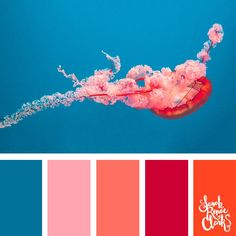 Vibrant jellyfish color scheme // Explore the beautiful colors of the ocean with these 25 color palettes inspired by ocean life and PANTONE's 2019 Color of the Year, Living Coral. Coral Colour Palette, Color Schemes Colour Palettes, Color Palate, Color Combinations, Coral Color Schemes, Cores Rgb, Paleta Pantone, Ocean Colors, Vibrant Colors