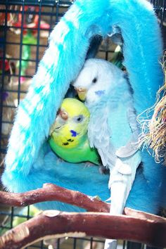 None of my budgies seemed to like one of those furry tent things being in their cage :/