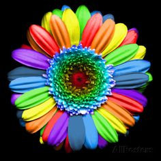 Rainbow Flower Photographic Print by Magda Indigo at AllPosters.com