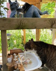 Create perfect zen for your catio with this fountain hack. Long summer days spent hunting out in the Serengeti, the watering hole beckons. Keep your cat hydrated in the summer heat with this bamboo fountain. The perfect addition to your summer catio. Outdoor Cat Enclosure, Cat Hacks, Outdoor Cats, Outdoor Cat Houses, Cat Playground, Cat Garden, Cat Condo, Cat Decor, Cattery