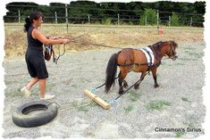 breaking to drive of the miniature horse - Pferd Horse Gear, Horse Tips, Horse And Buggy, Horse Love, Mini Horse Cart, Horse Harness, Mini Pony, Dressage, Horse Training