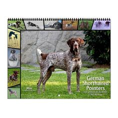 German Shorthaired Pointer Gsp Wall Calendar on CafePress.com