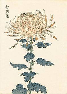 Keika Hasegawa Chrysanthemum Wood Block Prints 1st Edition 1893