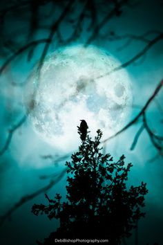 Full Moon Raven -Bird Crow -Winter Silhouette Nature -Cyan Teal Blue Black…