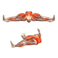 ૐ YOGA ૐ Upavistha Konasana ૐ - Flexión sentada hacia delante las Piernas se estiran en un gran ángulo y el Tronco se inclina hacia delante.. - Upavishtha Konasana avanzado - Posturas de Yoga   YOGA.com
