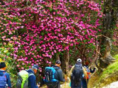 Top 3 rhododendron treks in India