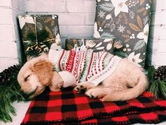 Golden Retriever Puppies 10 Etsy Finds Your Dog Wants For Christmas - This Christmas, treat your dog to something that will make them wag their tails all day long! Christmas Puppy, Christmas Mood, Christmas Morning, Christmas Tumblr, Merry Christmas, Christmas Christmas, Christmas Lights, Baby Animals, Cute Animals