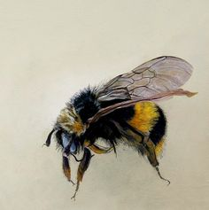 Scientific illustration of a bumble bee. Honey Bee Tattoo, Bumble Bee Tattoo, I Love Bees, Motifs Animal, Bee Art, Insect Art, Art Graphique, Bees Knees, Bee Keeping