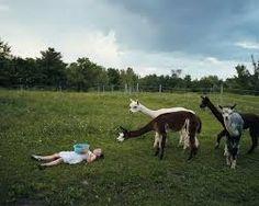 Amelia&the animals, robin schwartz http://robinschwartz.net/