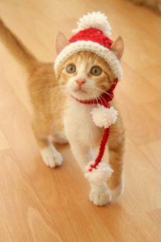 Santa Hat for Cats, Cat Santa Hat, Holiday Cat Hat, Christmas Hat for Cats and Kittens, Christmas Ca. Christmas Kitten, Christmas Hat, Christmas Animals, Christmas Humor, Cat Christmas Outfit, Cat Christmas Costumes, Christmas Ideas, Merry Christmas, Cat Santa Hat