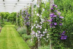 pergola-martha-stewart-clematis-2-gardenista