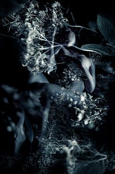 Self Portrait with Lace - Kirsty Mitchell Photography Dream Photography, Photography Projects, Macro Photography, Fantasy Photography, Merida, Kirsty Mitchell, Dark Fairytale, Fantasy Places, Altered Images