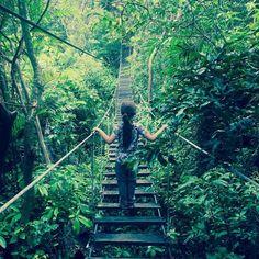 Skywalk over de hangbruggen in Monteverde  #monteverde #costarica #travelkid #travelwithkids #intothewild #nature #natgeo #skywalk #bridge #forest #cloudforest #costarica #puravida #santaelena #instatravel #instapassport #travel #travelphotography #wanderlust #adventure