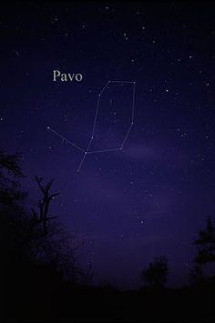 Pavo (constellation)