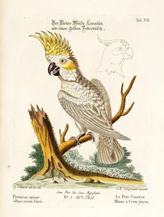 Verzameling van uitlandsche en zeldzaame vogelen :. Amsterdam :J.C. Sepp,1772-1781.. biodiversitylibrary.org/page/6725288