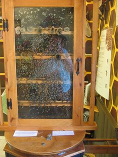 I NEED an indoor observation hive