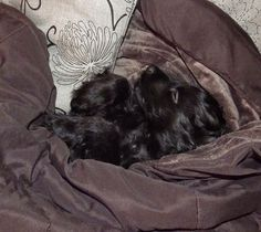 Fun For All: Sleepy Puppy Photo Galleries, Puppies, Gallery, Fun, Puppys, Roof Rack, Pup, Doggies, Teacup Puppies