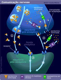 Sandra Tonsa - Psicóloga: Serotonina, o que é isso?