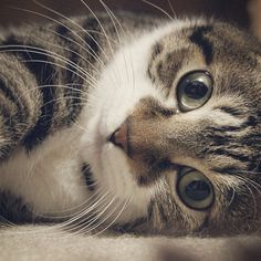 """""""People that don't like cats haven't met the right one yet."""" --Deborah A Edwards"""