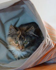 Martha Stewart Pet Cat Sack - currently at Petsmart - gray and orange.
