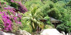 Die Insel Tioman - ein Paradies Restaurant, Plants, Paradise, Croatia, Island, Viajes, Diner Restaurant, Plant, Restaurants
