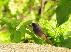 Fotó Bird, Animals, Animales, Animaux, Birds, Animal, Animais