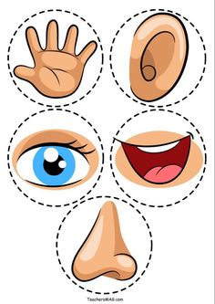 Five Senses Activity Printable Five Senses Activity For Preschool Students Teachersmag Com Five Senses Preschool, 5 Senses Activities, My Five Senses, Body Preschool, Preschool Learning Activities, Preschool Classroom, Preschool Worksheets, Toddler Activities, Sorting Activities