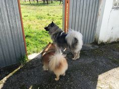Kira y Chester