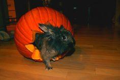 Bunny Climbs Out of Her Pumpkin Coach - October 31, 2011