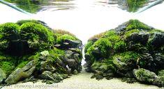Betta Tank, Live Aquarium, Aquarium Design, Plantar, Luz Led, Fresh Water, Natural, Aquascaping, Garden