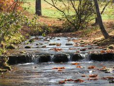 Greeson Hollow Creek... I Loved playing in this creek as a young child living in Tennessee.