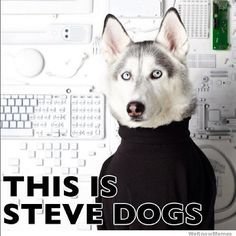#dogmeme  #funny  #dog  #stevedogs  #stevejobs  #hello  #steve  #jobs  www.anilols.co.uk for more funny animals #cats
