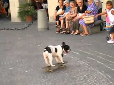French bulldog Pro Skater! But I'm annoyed at the kid that keeps kicking his skate board.