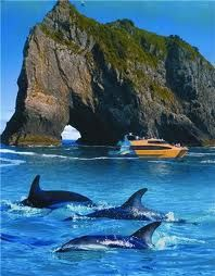 Swim with the dolphins. Hole in the Rock, Bay of Islands, New Zealand.