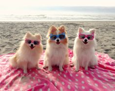 Not So Shabby - Shabby Chic: Pet Photography