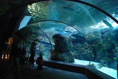 Omaha Nebraska Zoo Aquarium
