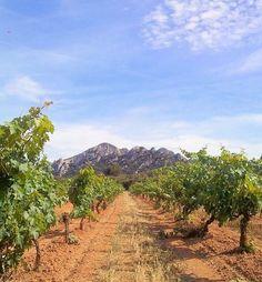 Saint Rémy de Provence entre montagnes et vignobles / between mountains and vineyards #sun #tourismepaca #seasnowsun #tourisme #tourism #france #pacatourism #pacatourisme #PACA #provencal #tourismpaca #tourismepaca #vin #wine #oenotourisme #vitivinicole #vigne #raisins #grapes #vineyards