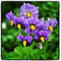 Flowers, Plants, Instagram, Florals, Planters, Flower, Blossoms, Plant, Planting