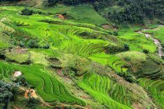 Terraced fields of rice near Sapa, Vietnam by Rob Kroenert