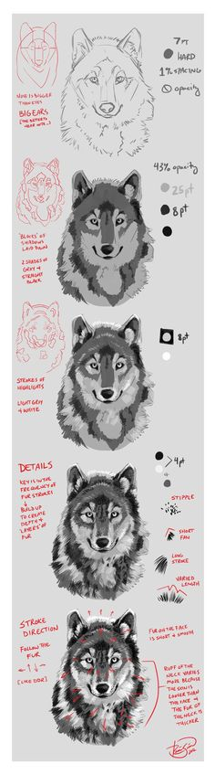 fdae534663fa9 Wolf Portrait Mini-Tutorial by rosiesinner. DW Custom Living LLC · Drawings  and paint
