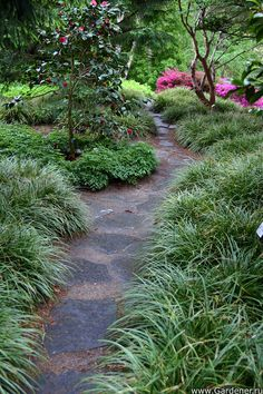 Garden Path / Magic Garden