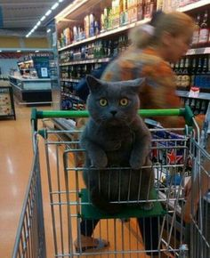 I think she has a real drinking problem, but don't mind me, I'm just a cat that was brought to the store.