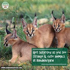 Get Surprised As You See Strange & Cute Animals At #BandhavgarhNationalPark.