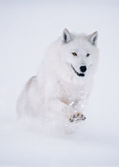 Stop killing Wolves!                                                                                                                                                                                 More