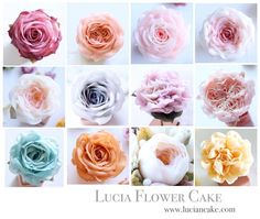 luciacake215Lucia Butter Cream Flower Cake & Class www.luciancake.com Lucia's Buttercream Roses Upcoming Overseas Workshop 2017 ⠀⠀⠀⠀⠀⠀⠀⠀⠀⠀⠀⠀⠀⠀⠀⠀⠀⠀⠀⠀⠀ ⠀⠀⠀⠀⠀⠀⠀⠀⠀⠀⠀⠀⠀⠀⠀ ⠀ ______[9. September]______ China 23th-30th _Sold out ⠀⠀⠀⠀⠀⠀⠀⠀⠀⠀⠀⠀⠀⠀⠀⠀⠀⠀⠀⠀⠀⠀⠀⠀⠀⠀⠀⠀⠀⠀ ______[10. October]______⠀⠀⠀⠀⠀⠀⠀⠀⠀⠀⠀⠀⠀⠀⠀⠀⠀⠀⠀⠀⠀⠀ _ USA * American Fair Class 12th _ Sold out 13th _ Only a few seat left. * American Fair Demo 14th _ Only a few seat left. www.cakefair.com copy : https://www.cakefair.com/de...