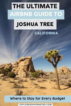 Heading to Joshua Tree? From vintage Airstreams and cozy cabins to luxe retreats and a stargazer bubble, this is a list of amazing Airbnbs that guests love most. Read more here. Where to stay in Joshua Tree | Best Joshua Tree Airbnbs | Joshua Tree travel tips California Attractions, California Travel Guide, Travel Guides, Travel Tips, Unique Hotels, Stargazer, Cozy Cabin, Road Trip Usa, Cool Places To Visit
