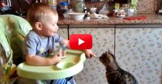 This Video Is So Cute I Can Hardly Stand It! Watch This Adorable Baby Share Breakfast With His Cat! | The Animal Rescue Site Blog