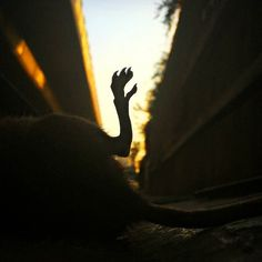 . موش مردگی(2) . . . . . . . . . . . . . . . .#mouse #deadmouse #photoshoot #photographylife #worldanimalprotection #animalprotection #savetheworld #animals ##sadr #صدر #اتوبان_صدر #موش #موش_مردگی #موش #موش_مرده