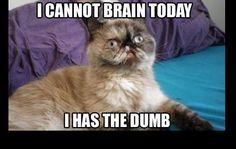 I has the dumb...